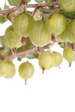 Gooseberries over white Royalty Free Stock Image