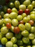 Gooseberries Royalty Free Stock Photography