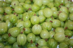 Gooseberries. Piled together to produce a close up of this fruit Stock Photography