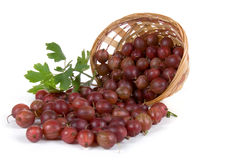 Gooseberries poured out of the basket Stock Photos