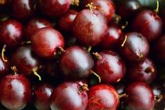 Gooseberries, Red Gooseberries Royalty Free Stock Photography