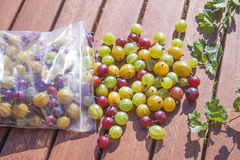 Gooseberries ribes uva-crispa Stock Photo