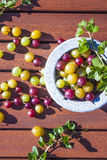 Gooseberries ribes uva-crispa Stock Images