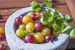 Gooseberries ribes uva-crispa Royalty Free Stock Photo