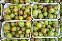Gooseberries on sale in boxes, view from the top, background royalty free stock images
