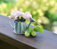Gooseberries and small roses in cute watering can Royalty Free Stock Photo