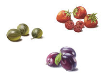 Gooseberries, strawberries and plums. On a white background stock illustration