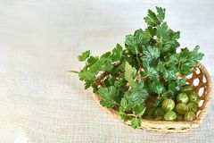 Gooseberries and twig with green leaves in wicker basket Stock Images