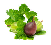 Gooseberries verdes e vermelhos foto de stock royalty free