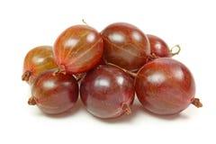 Gooseberries vermelhos foto de stock