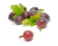 Gooseberries vermelhos com folhas imagem de stock royalty free