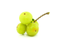 Gooseberries on white background. Royalty Free Stock Image
