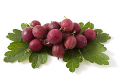 Gooseberries on white Royalty Free Stock Photography