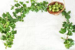 Gooseberries in wicker basket in twig frame with green leaves Royalty Free Stock Photos
