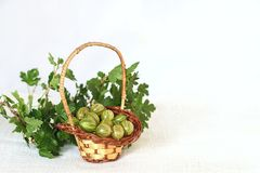 Gooseberries in wicker basket and twig with green leaves Stock Photos