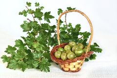 Gooseberries in wicker basket and twig with leaves Royalty Free Stock Photos