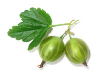 gooseberry Royaltyfria Foton