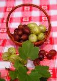 Gooseberry royalty free stock image