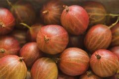Gooseberry. Delicious gooseberries background stock photo
