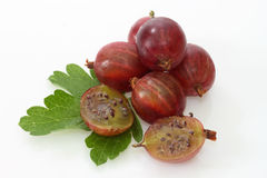 Gooseberry. Fresh Berries of gooseberry on a bright background royalty free stock images