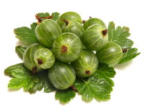 Gooseberry. The gooseberry is very tasty and useful berry stock photo