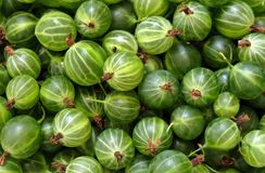 Gooseberry Stock Photography