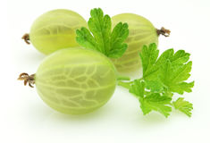 Gooseberry. With leaves on a white background royalty free stock photos