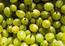 Gooseberry. Texture of ripe juicy gooseberry Stock Photography