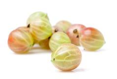 Gooseberry imagem de stock