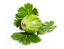 Gooseberry. Single Green Gooseberry with leaves isolated on white Stock Images