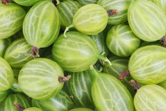Gooseberry. Object on a white background royalty free stock photo