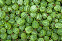 Gooseberry. A lot of gooseberry, green gooseberry Stock Image