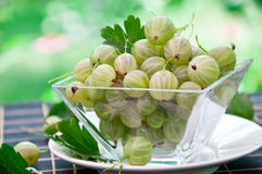 Gooseberry. Fresh gooseberry in glass bowl Royalty Free Stock Photography