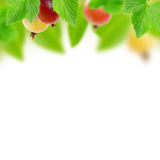 gooseberry Foto de Stock Royalty Free