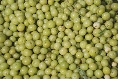 Gooseberry Foto de Stock