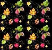gooseberry Image libre de droits