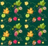 gooseberry Photographie stock libre de droits