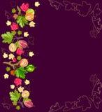 gooseberry Image stock