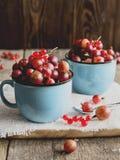 gooseberry Imagenes de archivo