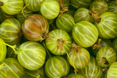 Gooseberry background Stock Photos