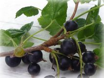 Gooseberry, Berry, Fruit, Plant stock photography