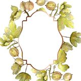 Gooseberry berry healthy food isolated. Watercolor background illustration set. Frame border ornament square. Gooseberry berry healthy food isolated. Watercolor royalty free illustration