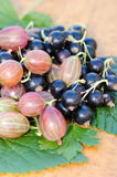 Gooseberry and blackcurrant Stock Photo