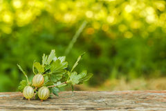 Gooseberry branch on a background of green Royalty Free Stock Images
