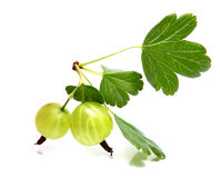 Gooseberry on a brunch with leaves. Isolated on white background Stock Photography