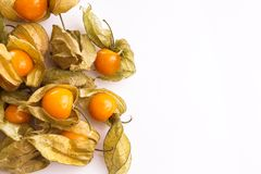 Gooseberry Cape Royalty Free Stock Photo