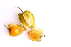 Gooseberry Cape Stock Photos
