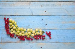 Gooseberry and currants Stock Image