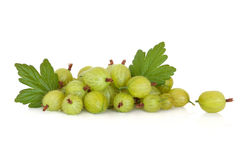 Gooseberry Fruit. With leaf sprigs isolated over white background stock photos