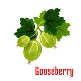 Gooseberry fruit botanical icon Royalty Free Stock Photos